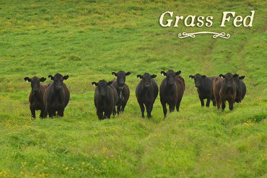 feature-grassfed